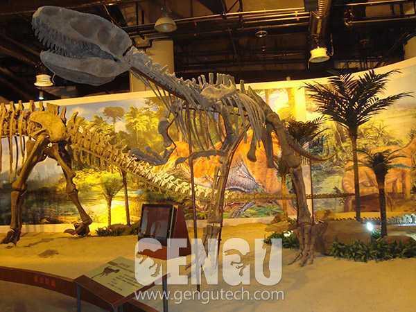 永川龙化石(FP-220)