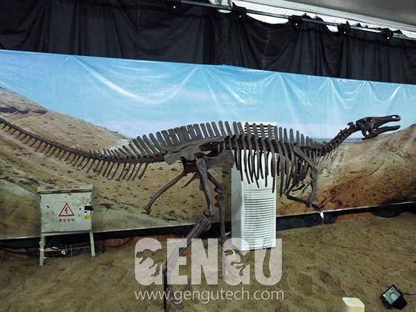 鸭嘴龙化石(FP-233)