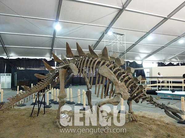 剑龙化石(FP-235)