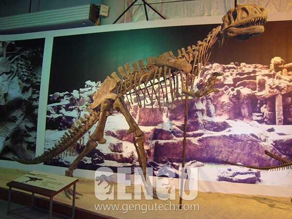 31Yangchuanosaurus