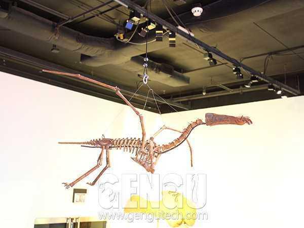 翼龙化石(FP-243)