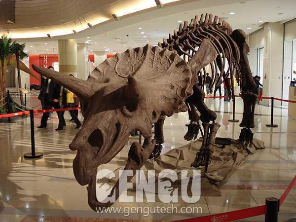 三角龙化石(FP-247)