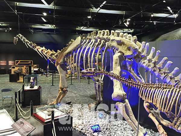 马门溪龙化石(FP-248)