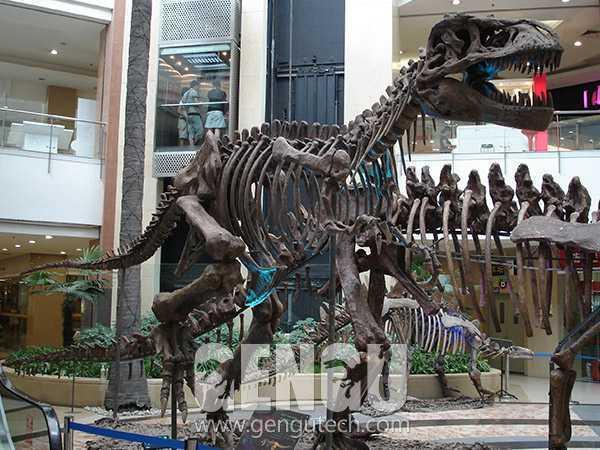 霸王龙化石(FP-253)