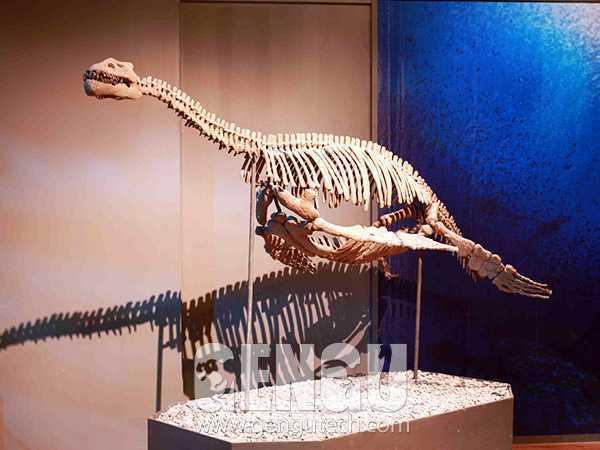 飞龙化石(FP-263)