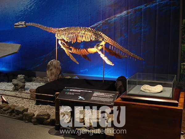 飞龙化石(FP-264)