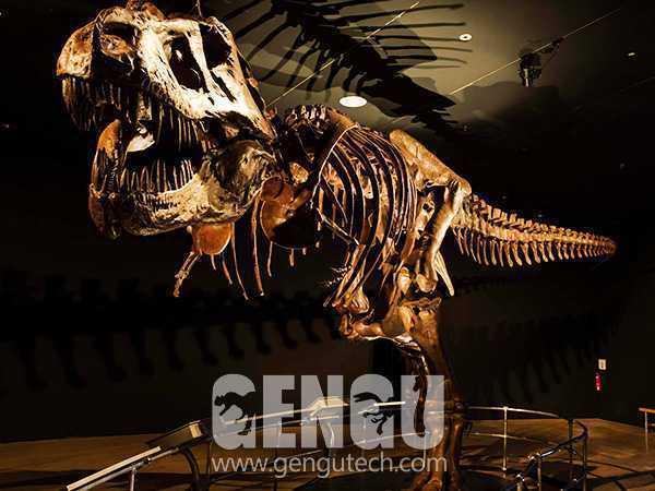霸王龙化石(FP-267)