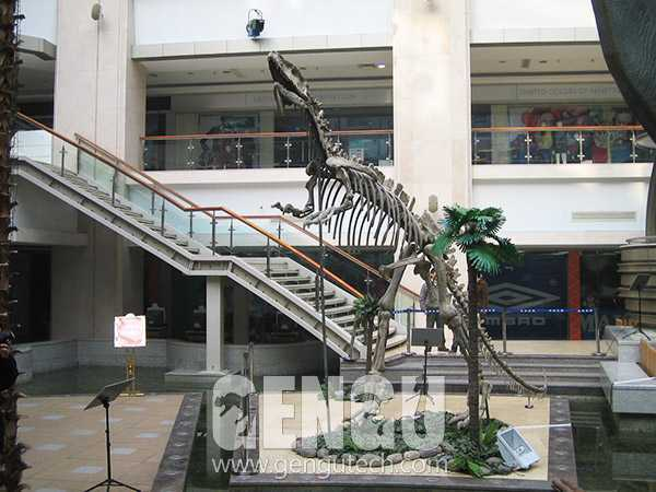 永川龙化石(FP-268)