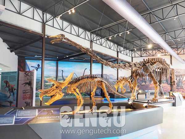 三角龙化石(FP-271)