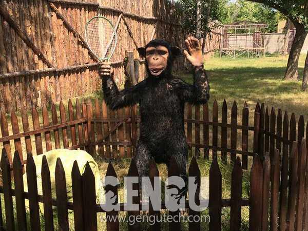 黑猩猩(AA-623)