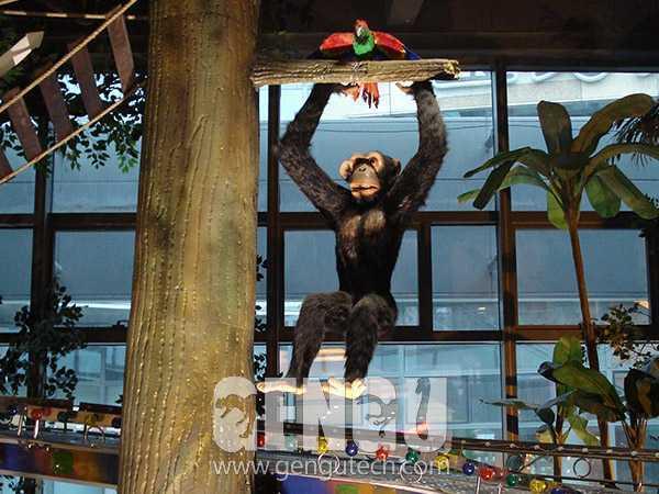 黑猩猩(AA-625)
