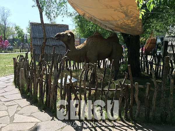 骆驼(AA-667)