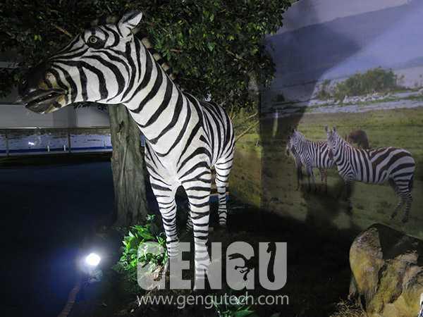 3(Zebra)