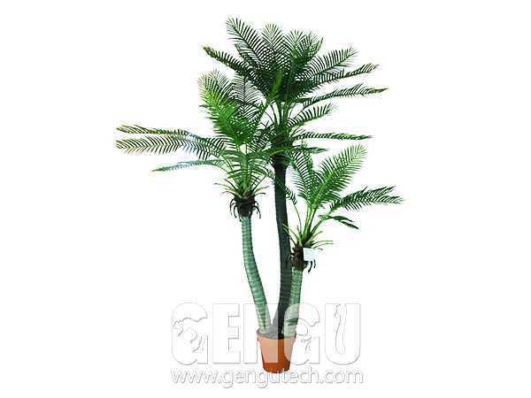 槟榔树(AP-920)