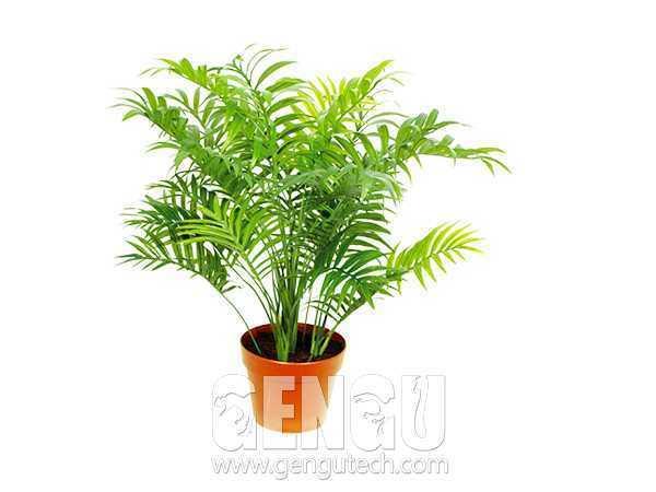 小竹葵Calamus