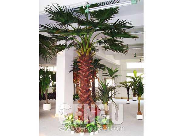 大棕榈树(AP-939)